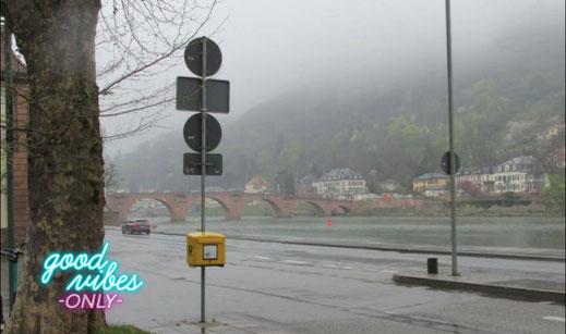 Dieses Foto zeigt einen lustigen Dekorations Vogel. er dienst als Eyecatcher für eien kurzen text zu dem Song Baby I Don't Care von elvis presley.