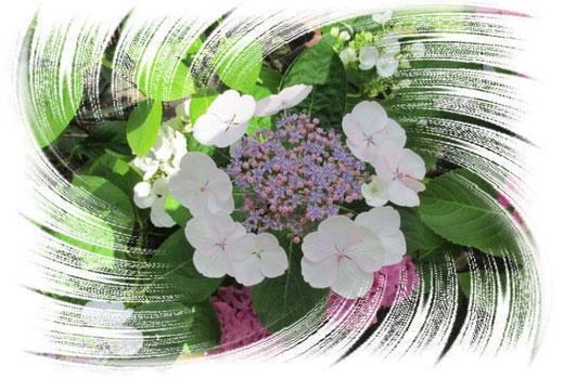 """""""Die Blume von Hawaii"""" im Stil DigitalArt nachempfunden."""