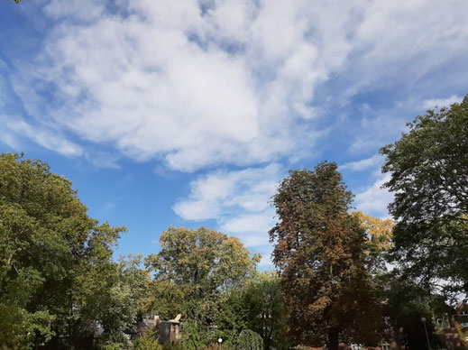 Weiße Wolken mit blauem Himmel und grünen Bäumen.