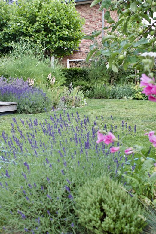 dieartigeGARTEN - Junigarten mit Lavendel, Katztenminze, Malven, Fingerhut, Fenchel + Gräsern