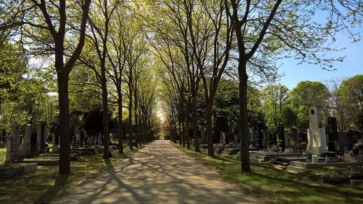 """""""Am Zentralfriedhof ist Stimmung..."""", denkt sich nicht nur Wolfgang Ambros"""