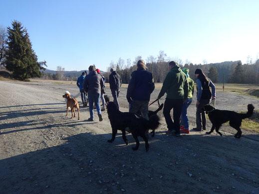 Wandern mit Hunden Sozialisierungsspaziergang