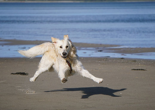 www.hundestrand-shop.de Hundestrände Holland interessanter Link Hund spielen