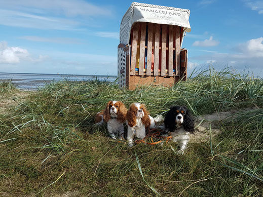 hundestrand Urlaub interessanter Link