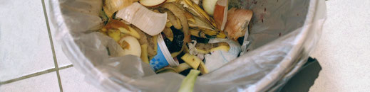 Hundestrand Hund frisst Müll Blog