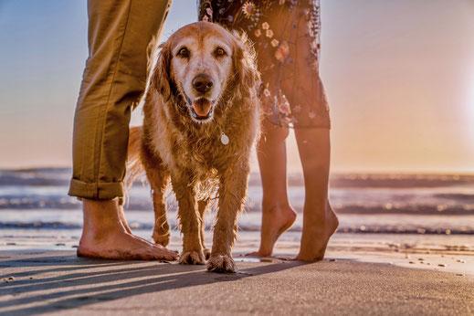 hundestrand shop Blog Die schönsten Hundestrände am Nord- und Ostsee