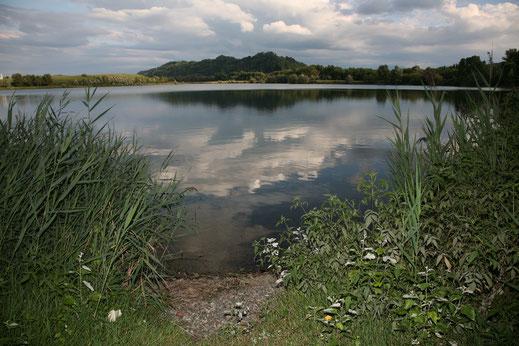 Pêche des carpes dans un lac privé