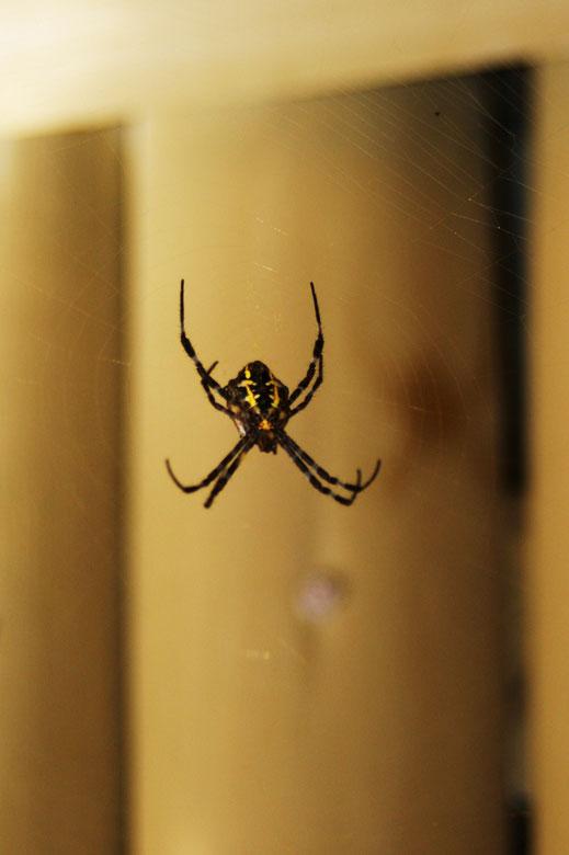Spider & Web | Aklan