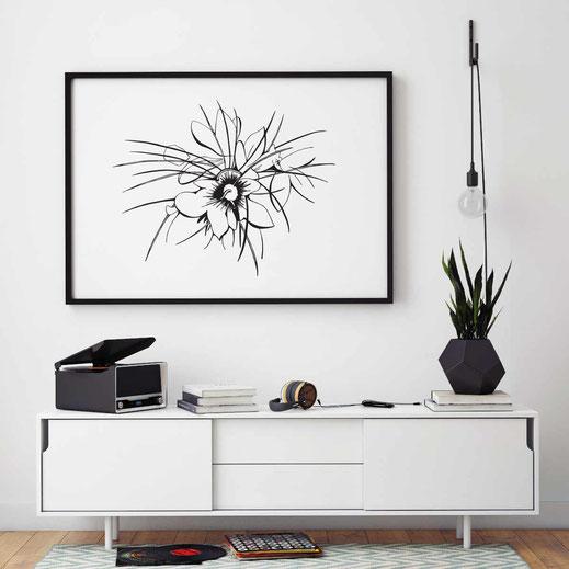 Illustration - schwarz-weiß - Safranblüte