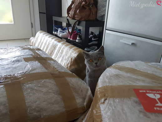 Auch Frey konnte das Auspacken und den Aufbau kaum abwarten.