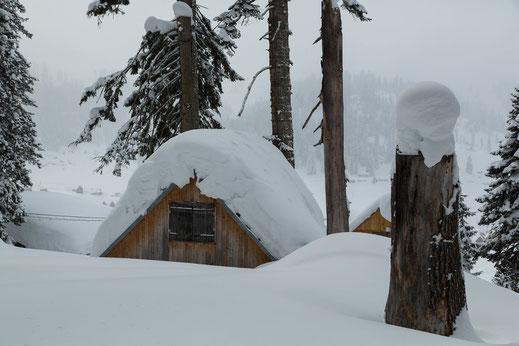 Viel Schnee in Bakhmaro ...