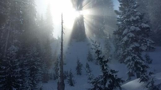 Die Magie des Lichtes, des Waldes und des Schnees fasziniert immer wieder aufs neue.