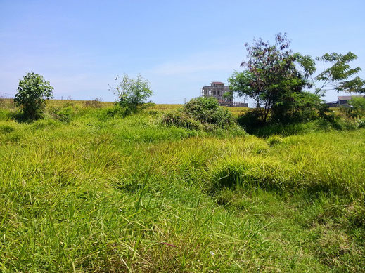 Land for sale Canggu.