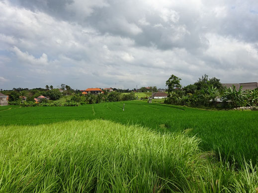 Bali land for sale located in Canggu.