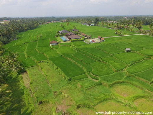 Leasehold land for sale, Ubud.
