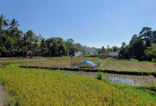 Land for sale located in the Ubud area.