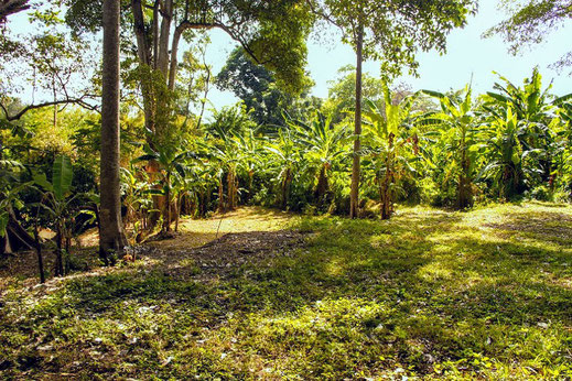 Land for sale in North Sanur.