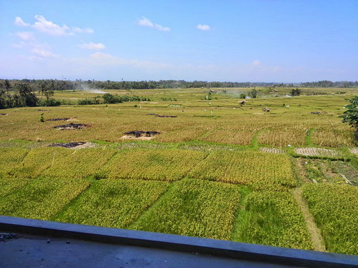 Land for sale Cemagi, Canggu.