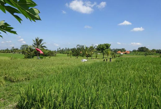 Land for sale in Ubud area.