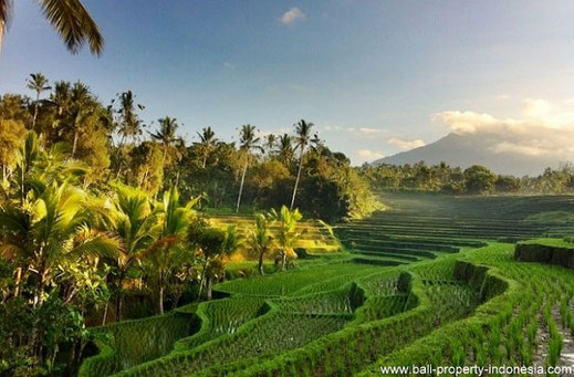 West Bali land for sale, Tabanan