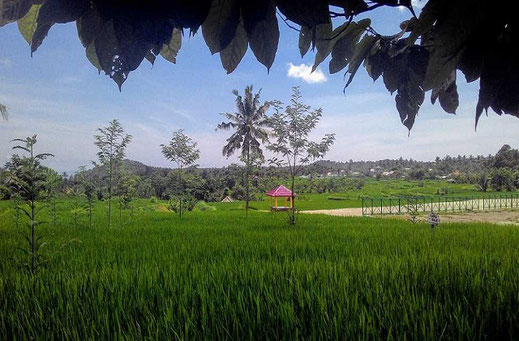 Land for sale by owner, North Lombok