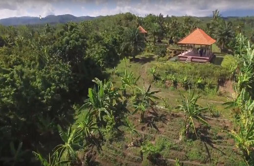 Land on offer for sale in Tabanan, West Bali.