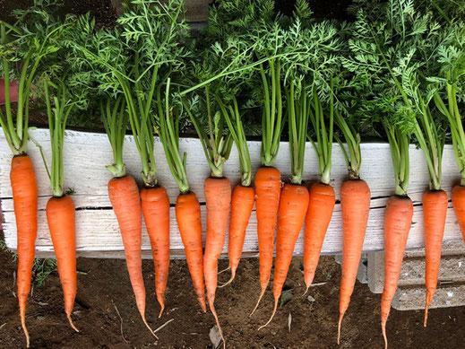 大切な人へ贈るこだわり野菜vegewanderの画像5