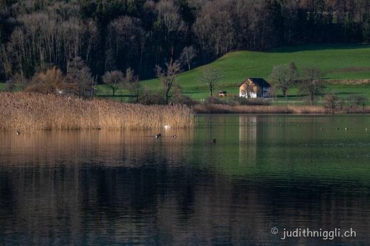 Am Greifensee