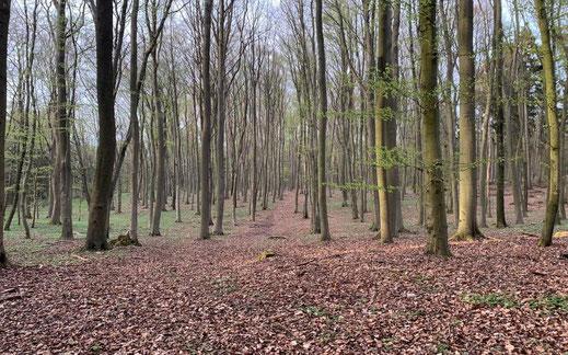 Laubmischwald 170 ha Forst Eigenjagd