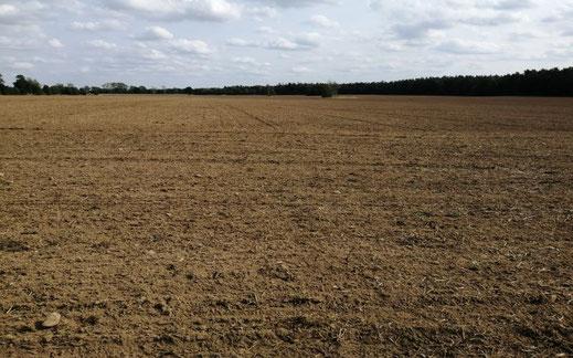 50 ha landwirtschaftliche Flächen an der Müritz