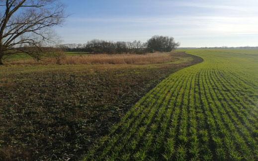 Landwirtschaftlicher Betrieb 2.500 ha Großraum Cottbus