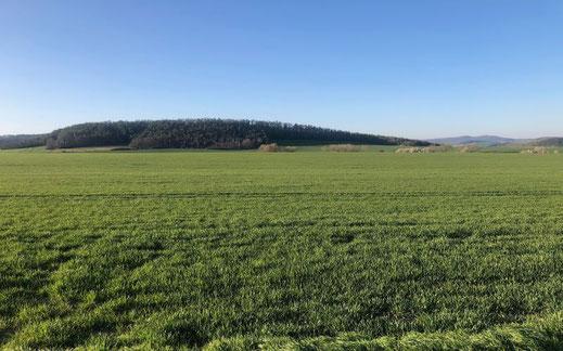 Landwirtschaftsflächen im Eichsfeld bei Göttingen - 220 ha