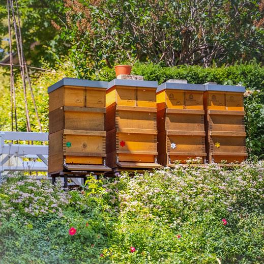 Bienenvölker in Holzbeuten