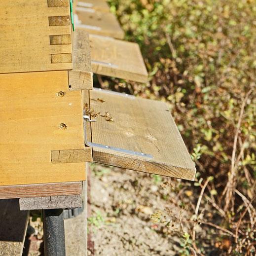 Anflugbretter mit Bienen