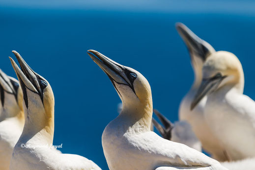 Helgoland images