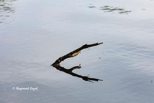 natur fotografie ast wasser spiegelung