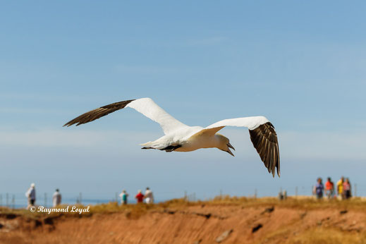 helgoland nature photography raymond loyal