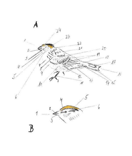 topografie vogelkoerper