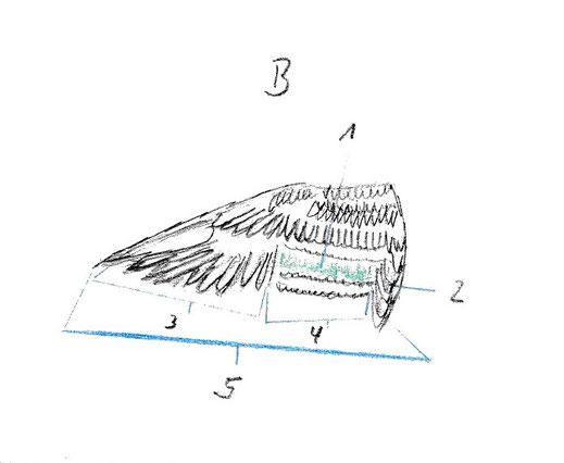 topographie vogelfluegel oberseite