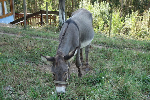 Esel im Baskenland