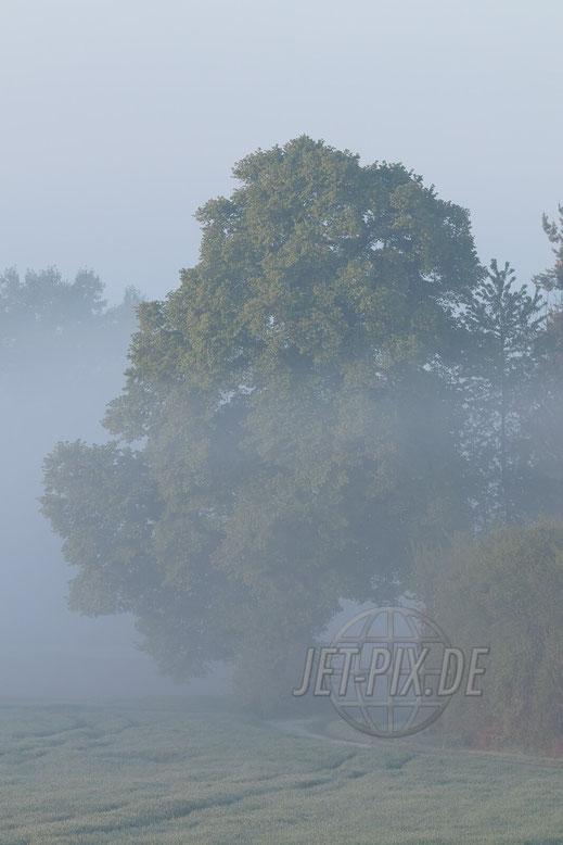 Uriger Baum im Morgenlicht mit Nebel