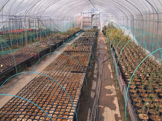 たにっくん工房の栽培ハウスで育てている植物です。