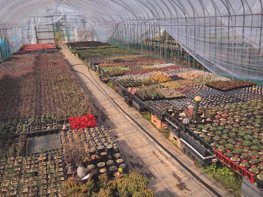たにっくん工房の植物栽培ハウスの様子です。