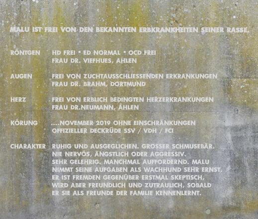 Eine Betonwand als Hintergrund für einen Steckbrief mit Gesundheits Infos: Röntgen: HD Frei, ED Normal, OCD Frei. Frau Dr. Viefhues, Ahlen. Augen: Frei von zuchtausschliessenden Erkrankungen. Herz: Frei von erblich bedingten Herzerkrankungen. Frau Dr. Neu
