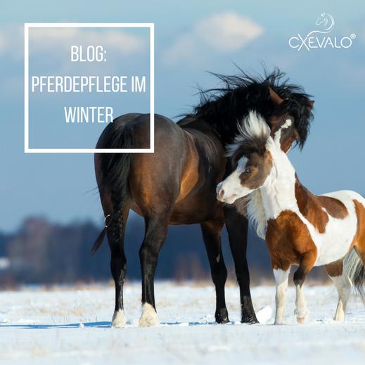 Pferd und Pony im Schnee