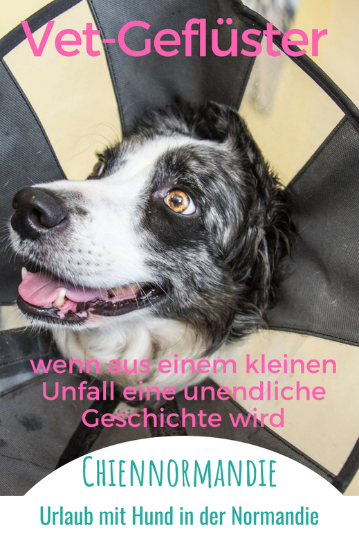 Leben mit Hund in Frankreich: Unsere Erfahrungen mit französischen Tierärzten und einem kranken Hund