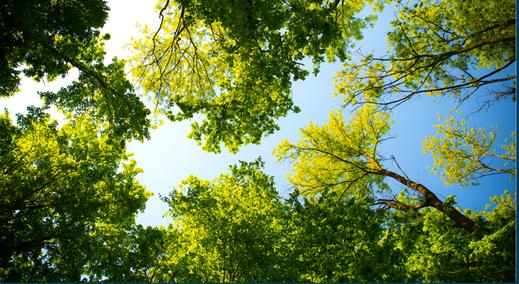 élagage d'arbre Hautes Pyrénées