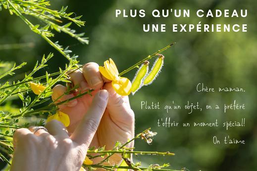 TOURAINE TERRE D'HISTOIRE - bon cadeau - plantes sauvages comestibles - cueillette sauvage - Val de Loire