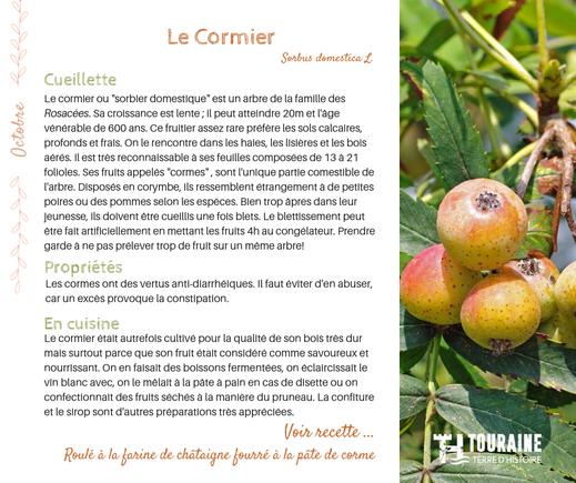 corme cormier fruit sauvage