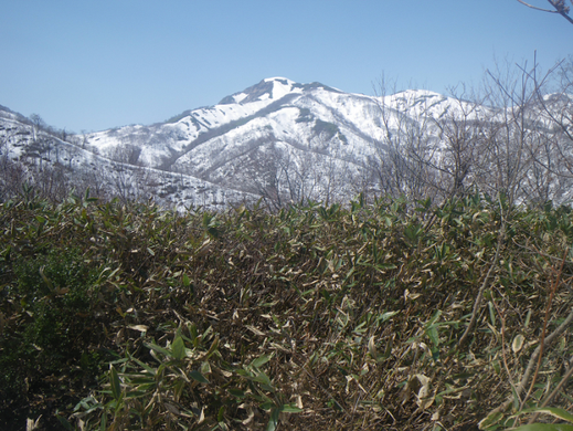 藪尾根の向こうに望む願経寺山、登ってみたい